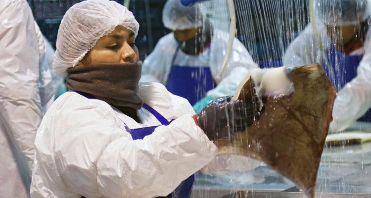Ley de Jibia: pesqueros industriales entregan al Gobierno carpetas para evaluar Plataforma Social