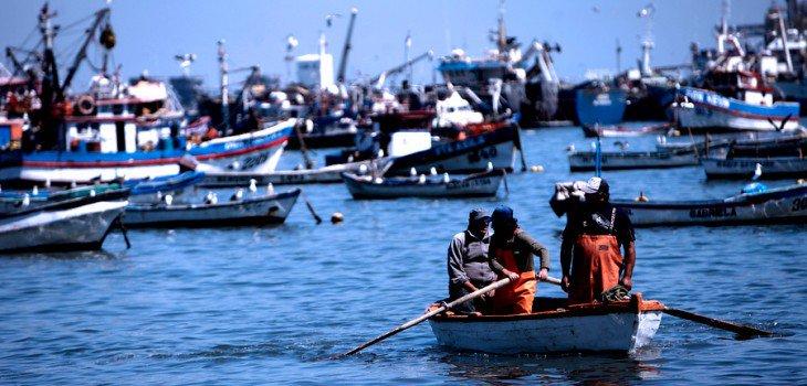 Inpesca alerta drástica reducción de cuota de la jibia para Chile en Organización Regional Pesquera
