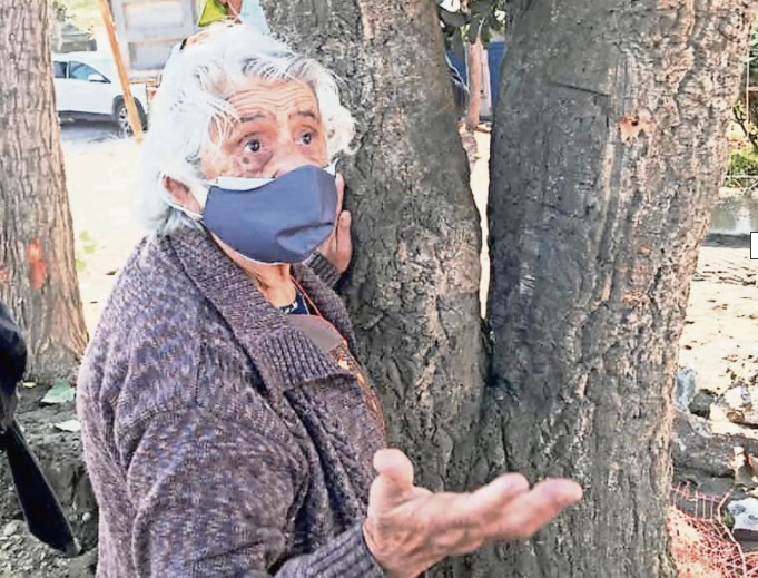 Vecina de 88 años busca impedir que talen un árbol en Talcahuano